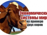 Две коровы и типы общества: доходчиво об экономических системах